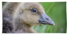 Greylag Goslings, Iceland Bath Towel