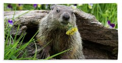 Groundhog  Kit Marmota Monax Hand Towel by Debbie Dicarlo