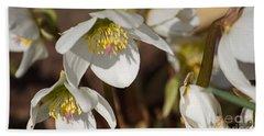 Helleborus Niger - Christrose Bath Towel