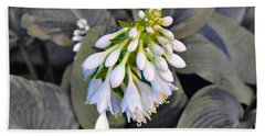 Hosta Ready To Bloom Hand Towel