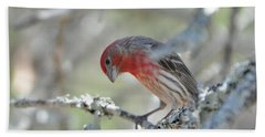 House Finch Hand Towel