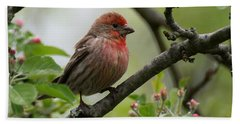 House Finch In Apple Tree Hand Towel