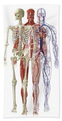 Human Body Systems, Illustration Hand Towel