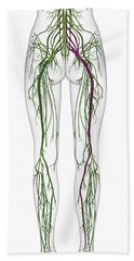 Human Nervous System, Lower Body Bath Towel