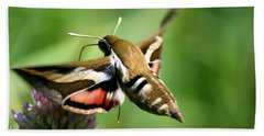 Hummingbird Moth From Behind Hand Towel