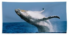 Humpback Whale Megaptera Novaeangliae Hand Towel by Panoramic Images