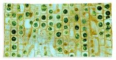 Micrography Photographs Bath Towels