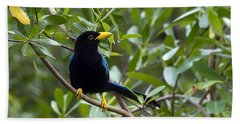 Immature Yucatan Jay Bath Towel