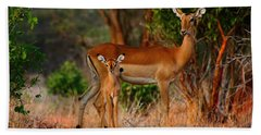 Impala And Young Hand Towel by Amanda Stadther