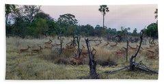 Impalas Aepyceros Melampus Running Hand Towel