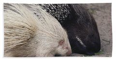 Indian-crested Porcupines Normal Hand Towel