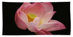 Indian Lotus On Black --- Sacred Light Bath Towel