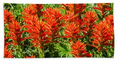 Bath Towel featuring the photograph Indian Paintbrush by Sue Smith