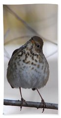 Inquisitive Hermit Thrush Hand Towel