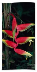 Inverted Inflorescence Of Heliconia Bath Towel