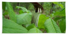 Jack In The Pulpit Hand Towel