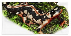 Kaisers Spotted Newt Hand Towel