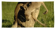 Kangaroos Taking A Bow Hand Towel by Bob Christopher