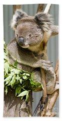 Koala Hand Towel