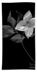 Kousa Dogwood In Black And White Bath Towel