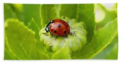 Lady Bug In The Garden Hand Towel