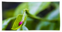 Ladybug Cup Hand Towel