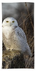 Late Season Snowy Owl Hand Towel
