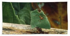 Leaf-cutter Ants Hand Towel