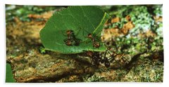 Leafcutter Ants Hand Towel