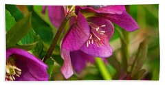 Hand Towel featuring the photograph Lenten Rose by Jordan Blackstone