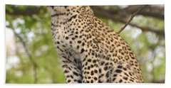 Leopard Cub Gaze Hand Towel by Tom Wurl