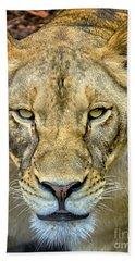 Lion Closeup Bath Towel by David Millenheft