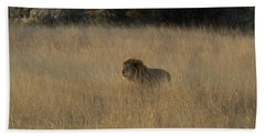 Lion Panthera Leo In Tall Grass That Hand Towel
