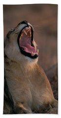 Lion Yawning Hand Towel