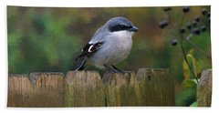 Loggerhead Shrike On Garden Fence Hand Towel
