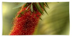 Lone Bottlebrush Hand Towel