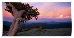 Lonesome Pine Hand Towel by Jim Garrison