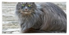 Long Haired Gray Cat Art Prints Bath Towel