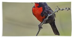 Long-tailed Meadowlark Hand Towel by Tony Beck