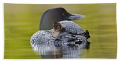 Loon Chick Resting On Parents Back Hand Towel