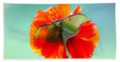 Luna Moth On Poppy Aqua Back Ground Hand Towel