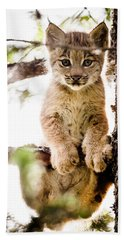 Lynx Kitten In Tree Bath Towel