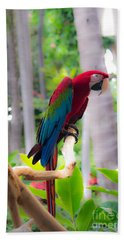 Hand Towel featuring the photograph Macaw by Angela DeFrias