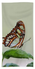 Hand Towel featuring the photograph Malachite Butterfly #5 by Judy Whitton