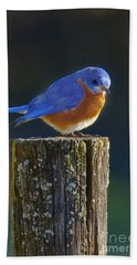 Male Bluebird Hand Towel