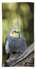 Hand Towel featuring the photograph Male Cockatiel by Judy Whitton