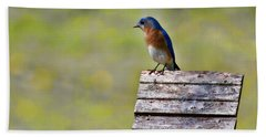 Male Eastern Bluebird Bath Towel by Lana Trussell