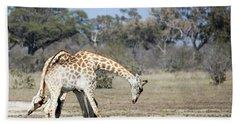 Male Giraffes Necking Bath Towel