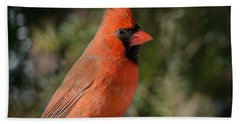 Male Northern Cardinal 3 Hand Towel by Kenneth Cole