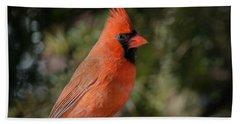 Male Northern Cardinal Hand Towel